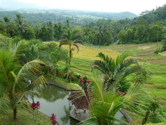 Campos de arroz em Bali