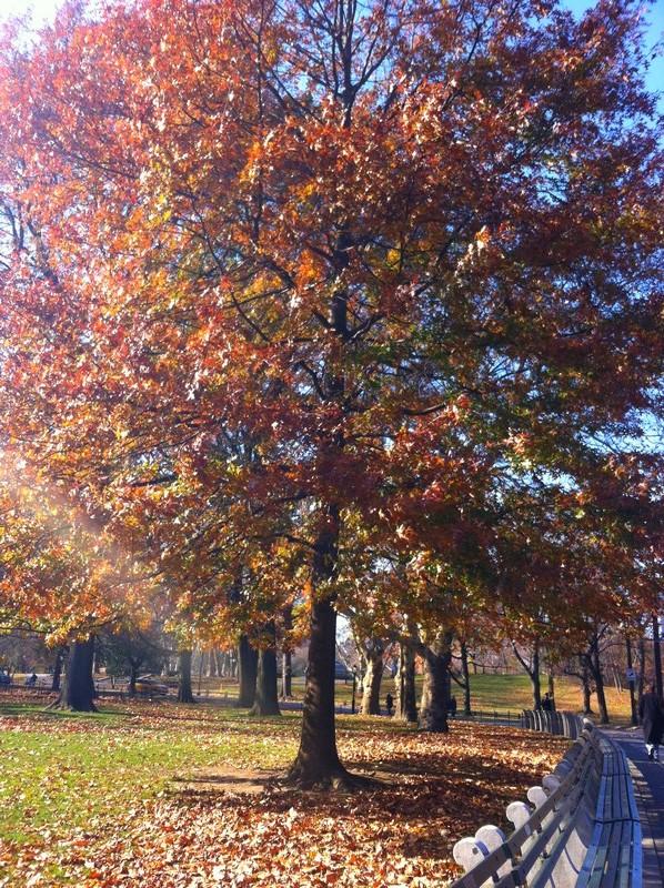 Como não amar o outono?