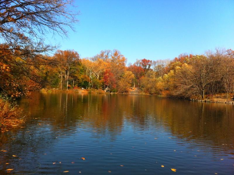 O contraste do lago e das folhas