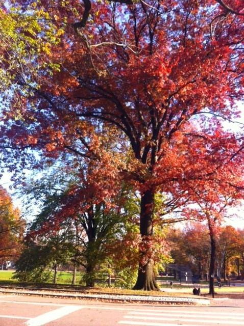Na saída e o outono dando um show no Central Park
