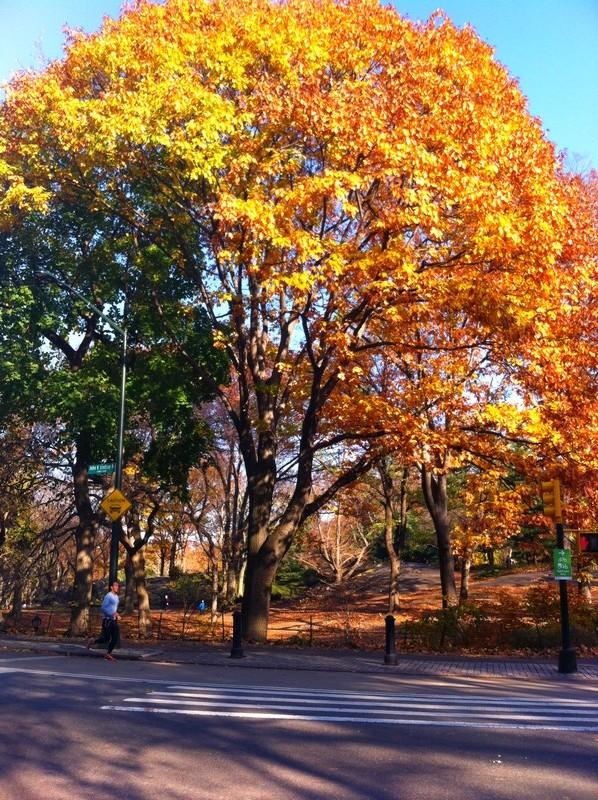 Eu amo o outono