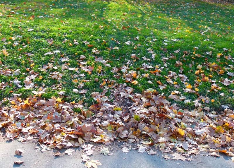 As folhas no chão