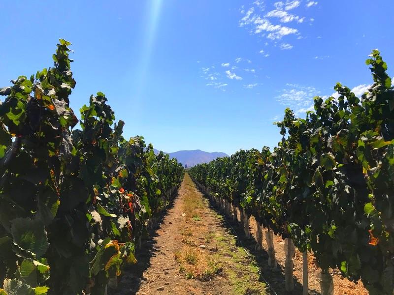 vinícolas em santiago